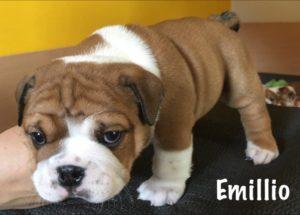 emillio4