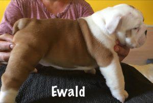 ewald1