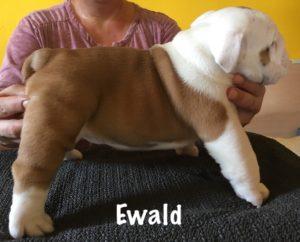 ewald2